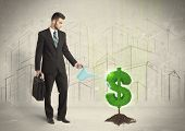 image of pores  - Business man poring water on dollar tree sign concept on city background - JPG