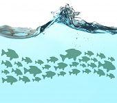 image of school fish  - Fish school under water - JPG