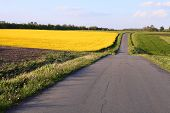 image of rap  - raps and ground fields and forest colorful landscape - JPG