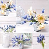 foto of caged  - Collage from photos with fresh spring blue muscaries and pink daffodils flowers in bucket and candles in decorative bird cages on white painted wooden planks - JPG