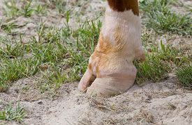 picture of cattle breeding  - Close up of pruned cattle hoof standing on grass - JPG