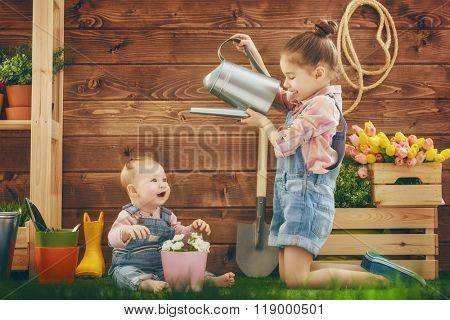 Cute children girls caring for her plants. Sisters watered flowers in pots. Spring concept, nature and care. Two little girls gardening in the backyard.