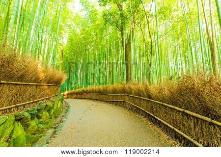 Arashiyama Bamboo Forest Curved Footpath Nobody H