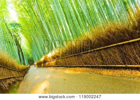 Arashiyama Bamboo Forest Road Grass Fence Tilted
