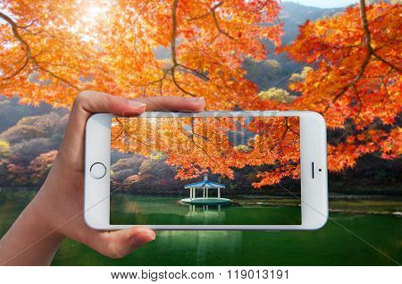 Hand Holding Smart Phone Take A Photo At Colors Of Autumn In Naejangsan,korea
