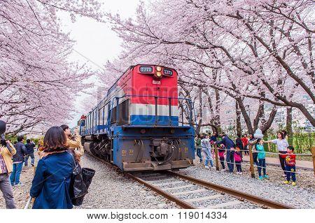 Jinhae Gunhangje Festival is the largest cherry blossom festival in Korea.