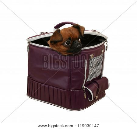 Doggie In A Bag Carrying