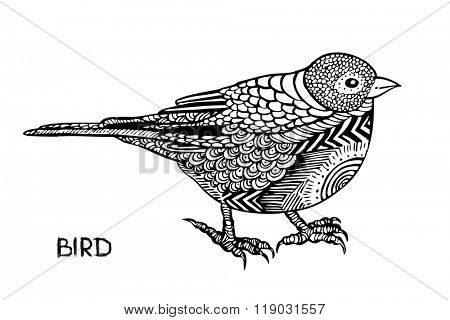 Fantasy bird, hand drawn vector illustration