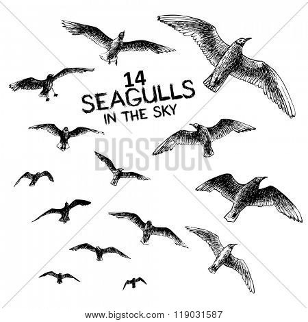 14 seagulls in the sky, engraved style hand drawing vector illustration