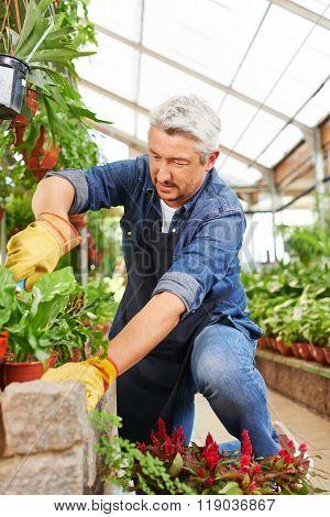 Gardener working in a greenhouse with garden shovel