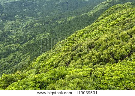 Overlooking green forest