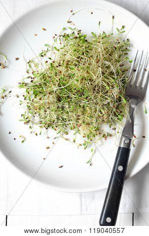 Fresh Green Alfalfa Sprouts
