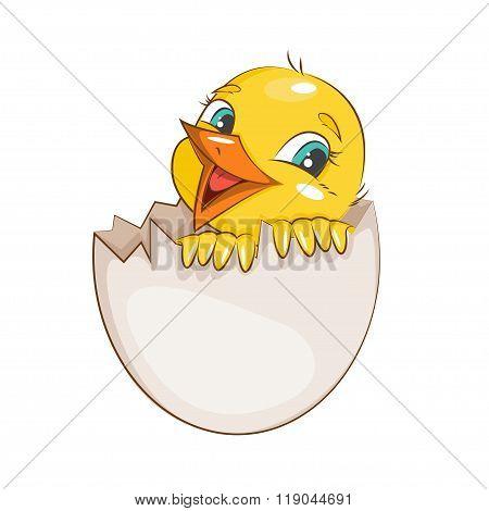 Little charming chicken.