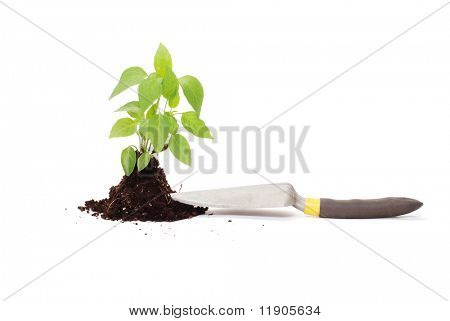 Green plant with dirt on white background