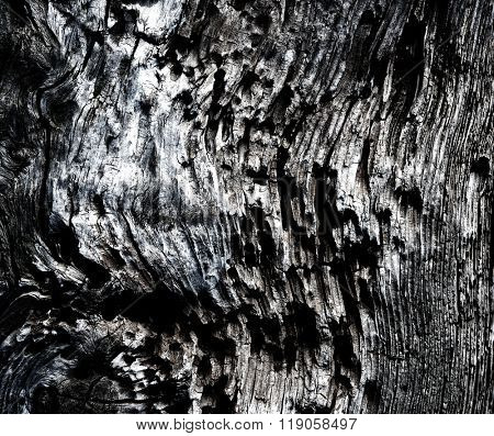 Weathered and corroded old drift wood log in monotone.