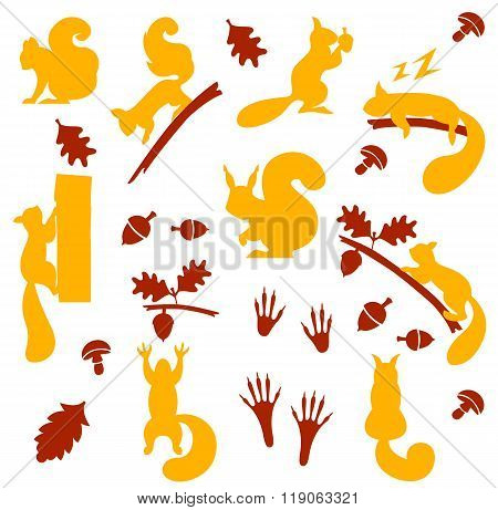 Vector set of orange furry squirrels with nuts isolated on white background.