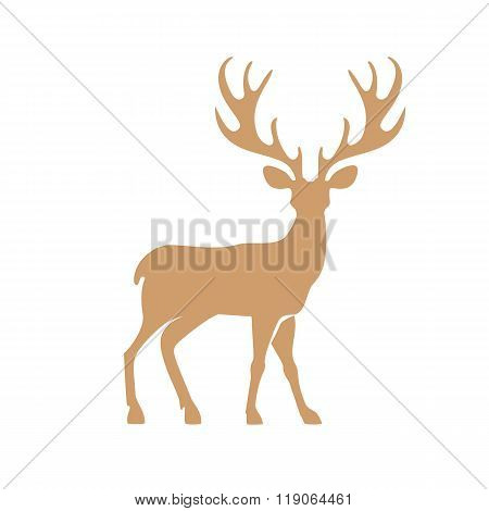 Deer with antlers.