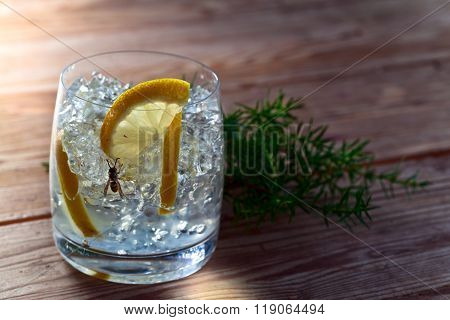 Gin With Lemon , Ice And Juniper Branch