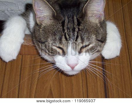 Lookout Cat