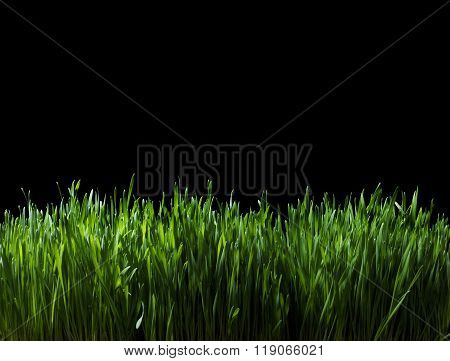 Lush Green Grass At Night