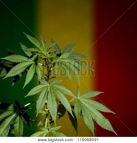 Marijuana plant on rastafarian flag background.