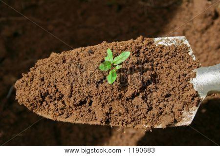 Gardening Trowel