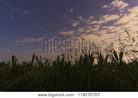 Beautiful dawn sky White clouds, blue sky, stars and cornfield With Constellations Lacerta, Cassiope