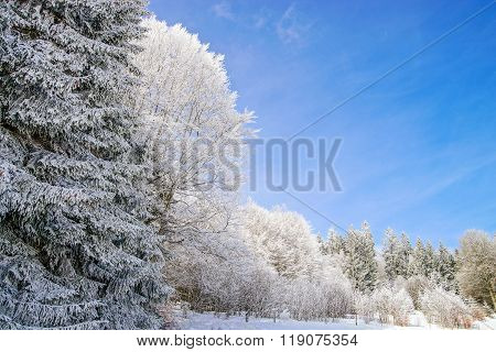 Beautiful Perspective Natural Landscape With Frosty Trees