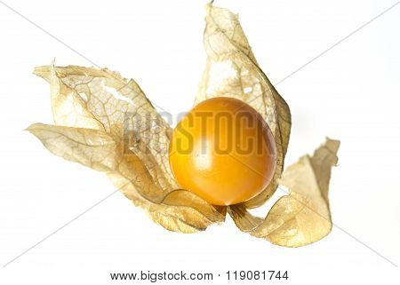 Physalis Fruit With Husk