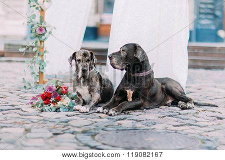 Couple of purebred dogs sitting on the pavement near the wedding tent