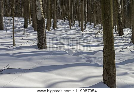 Winter Forest On A Sunny Day.