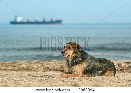 Stray Dog On The Shore
