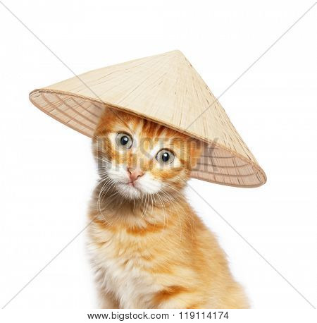 Red cat in asian conical hat, isolated on white background
