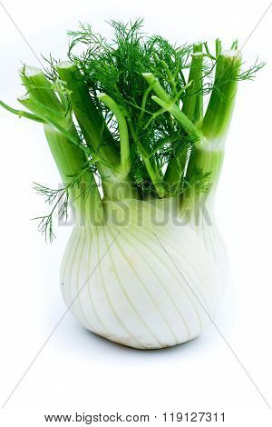 Fresh Fennel Isolated On White Background.