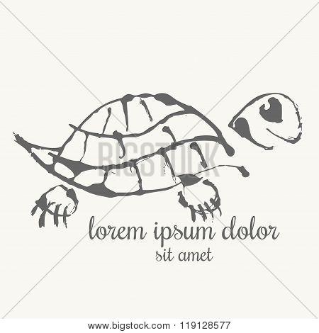 Turtle Hand Drawn Illustration. Logo Template