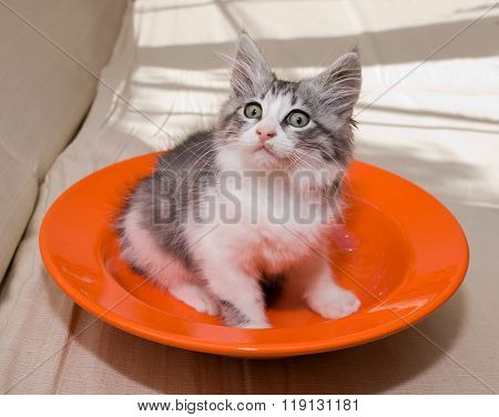 Surprised Kitten On A Plate