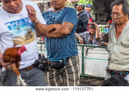 UBUD, BALI / INDONESIA - FEB 22, 2016: Unidentified local people during Balinese traditional cockfighting competition. Cockfighting is now illegal throughout in the US, Brazil, Australia and Europe