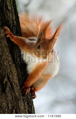 Ardilla en el tallo del árbol