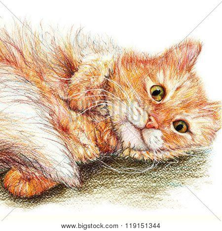 Cute Nice Ginger Fluffy Cat Hand Drawn Art