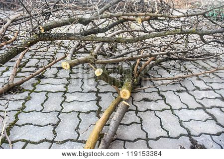 Sawn Branches