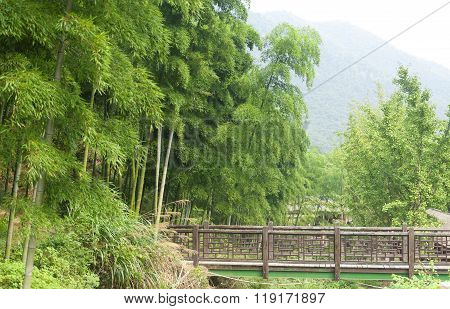 Bridge Into Bamboo Forest