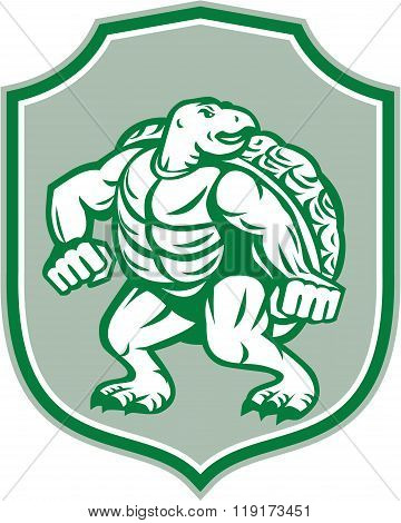 Green Turtle Fighter Mascot Shield Retro