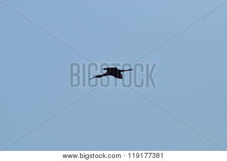 The Bird Snipe