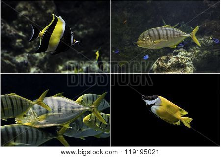 Photo set: Marine tropical fish