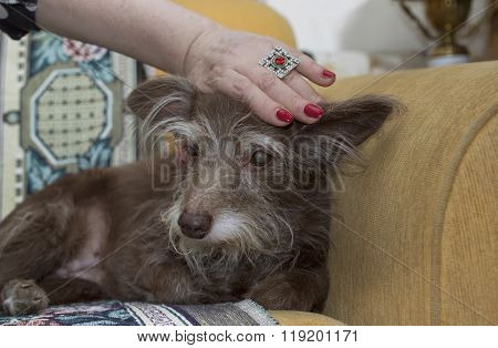 Woman Stroking Her Old Dog