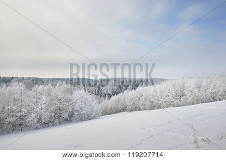 Aerial View Of A Dark Snow-covered Pine Forest