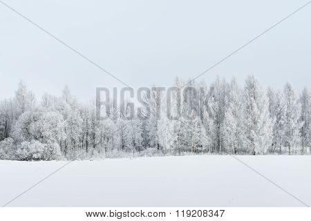 Winter Rural Landscape With A Snow And Rime Covered Forest And A Field