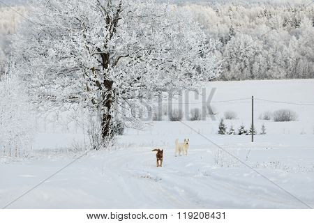 Red And White Dog In Snow Under A Rime-covered Tree