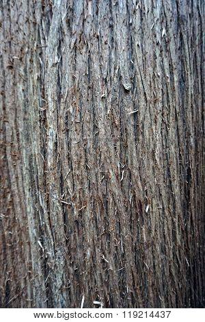 Cedar Bark