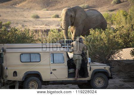 Desert Elephant in the Kunene region of Namibia. ** Note: Soft Focus at 100%, best at smaller sizes
